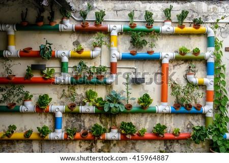 Urban Gardening, Malacca, Malaysia - stock photo