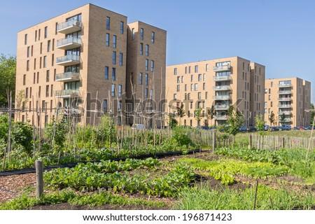 Urban greening - stock photo