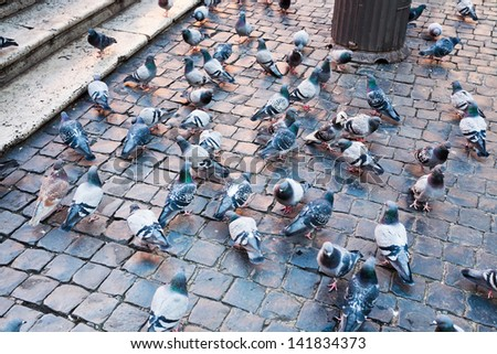 urban pigeons on Piazza della Rotonda in Rome, Italy - stock photo