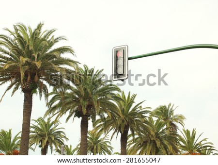 Urban traffic light against the sky and palm trees near road - stock photo