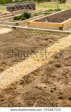 Urban vegetable garden is ready for planting in Spring. - stock photo