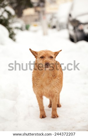 Urban winter scene with beautiful dog in the snow - stock photo