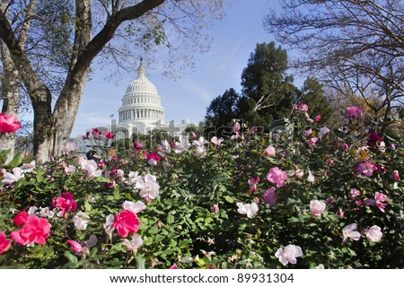 US Capitol Building with flowers, Washington DC. - stock photo