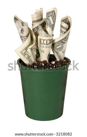 US currency growing in a pot of soil on white background - stock photo