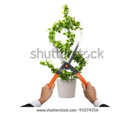 us dollar cutting on white - stock photo