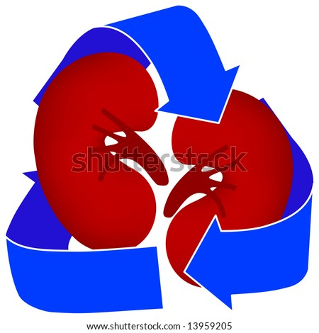 Use this icon to represent organ donation or kidney dialysis. - stock photo