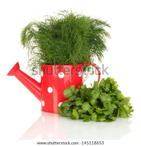 Useful herbs in red watering can isolated on white - stock photo