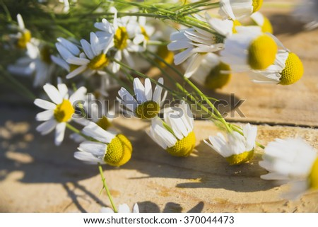 Useful properties of chamomile are used for the treatment of many diseases. In the old chamomile teas used to treat inflammation of the gastrointestinal tract, as a choleretic   - stock photo