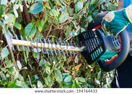 Using a hedge trimmer to trim the bushes - stock photo