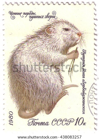 "USSR - CIRCA 1980: a post stamp printed in the USSR shows nutria with the inscription ""Myocastor coypus"", series ""Fur Animals"", circa 1980 - stock photo"