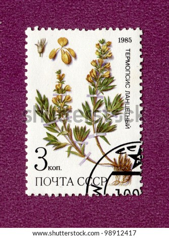 USSR - CIRCA 1985: a stamp from USSR, shows medicinal plant from Siberia, circa 1985 - stock photo