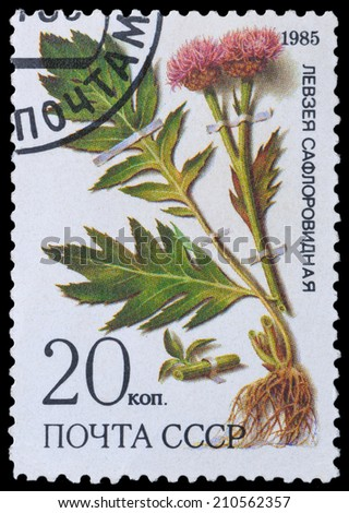 USSR - CIRCA 1985: a stamp from USSR, shows medicinal plant from Siberia - Leuzea, circa 1985. - stock photo