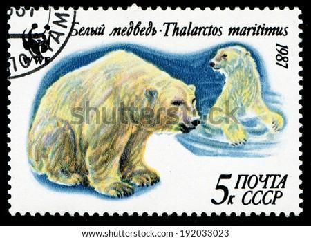USSR - CIRCA 1987: a stamp printed by USSR shows  a Polar bear, circa 1987 - stock photo