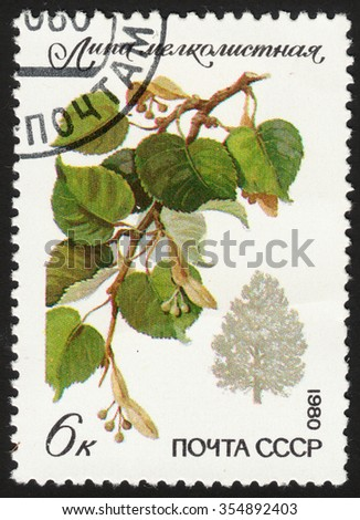 "USSR - CIRCA 1980: A stamp printed in the USSR shows a tillet (Tilia cordata), the series ""Protected trees and shrubs"", circa 1980  - stock photo"
