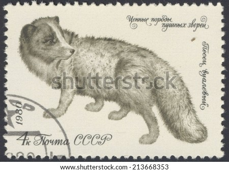 USSR - CIRCA 1980: A stamp printed in the USSR shows Arctic fox (Alopex lagopus), circa 1980 - stock photo