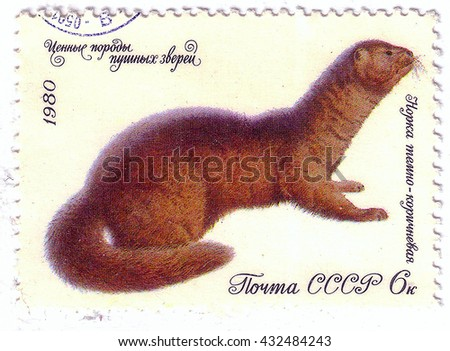 USSR - CIRCA 1980: A stamp printed in the USSR shows Fur mink dark brown, circa 1980 - stock photo