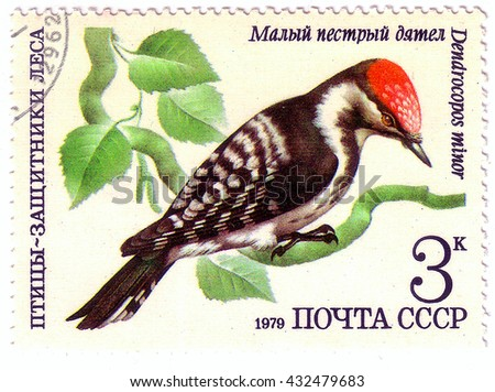 USSR - CIRCA 1979: A stamp printed in USSR shows a Dendrocopos minor, woodpecker, bird, small spotted woodpecker, circa 1979 - stock photo