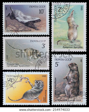 """USSR - CIRCA 1987: A Stamp printed in USSR shows rodents from the series """"Endangered Wildlife"""", circa 1987 - stock photo"""