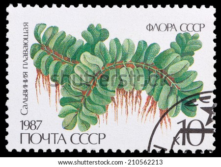 USSR - CIRCA 1987: A stamp printed in USSR shows the Salvinia natans, circa 1987 - stock photo
