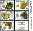 USSR - CIRCA 1980: A stamp printed in USSR shows the sea-buckthorn, cedar siberian, oak, ash, lime, circa 1980. - stock photo