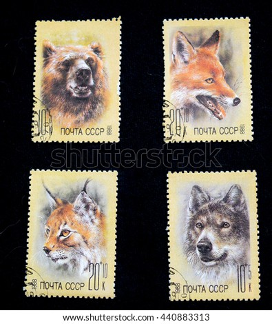 USSR - CIRCA 1988: Four stamps of the USSR with the image of a Fox, wolf, bear and lynx. A series of postage stamps help Fund zoos 1988. - stock photo