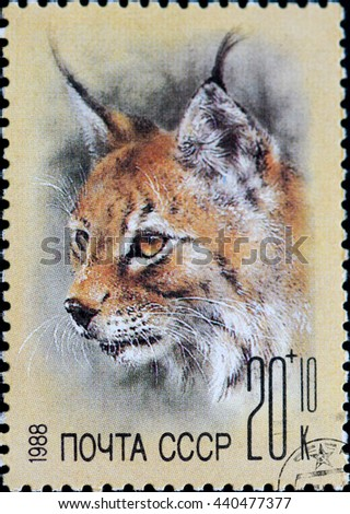 USSR - CIRCA 1988: Postage stamp of the USSR with the image of the lynx. A series of postage stamps help Fund zoos 1988. - stock photo