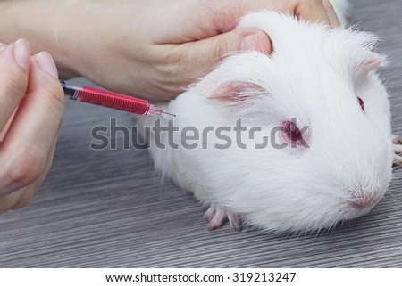 Vaccine test on laboratory mouse, applied by injection, Testing drugs and vaccine on a mouse, Laboratory animals, Animal Inoculation, guinea pig. (Vintage Style Color) - stock photo