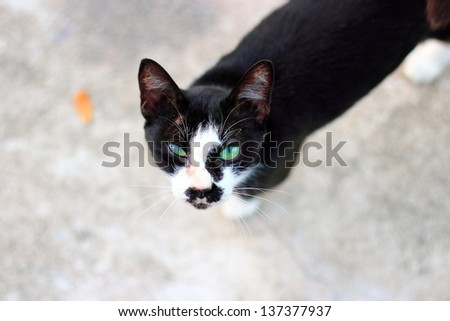 Vagrant cat. Dirty an animal in the street - stock photo