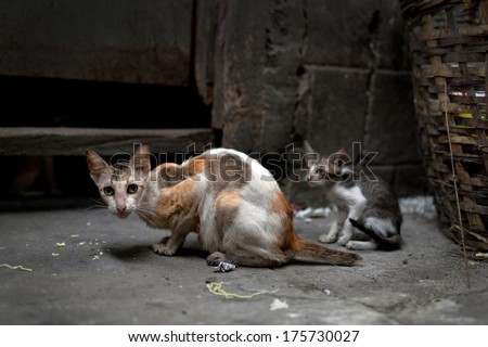 Vagrant cats. Homeless wild cats on dirty street in Asia - stock photo