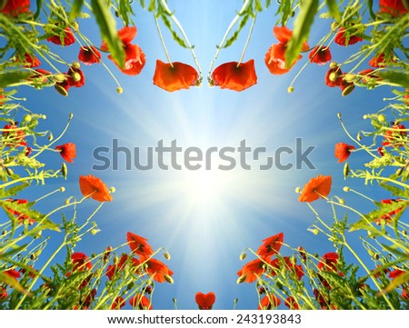 Valentine card as heart with poppies in sun`s glow (February 14, love) - stock photo