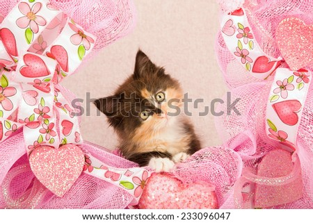 Valentine kitten sitting inside pink Valentine wreath on light pink background  - stock photo