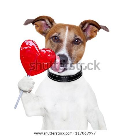 valentine lollipop heart dog licking - stock photo