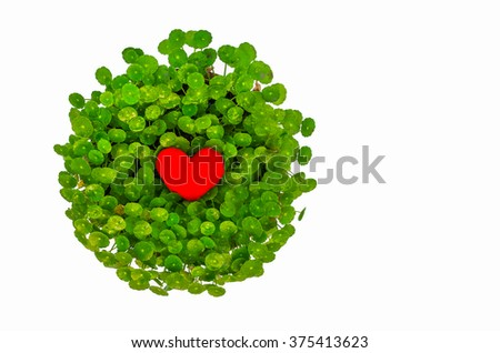 Valentine love symbol surrounded by green lily isolated in white background - stock photo