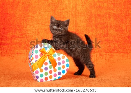 Valentine or mothers day theme kitten with polka dot pattern heart shaped gift box on orange background - stock photo