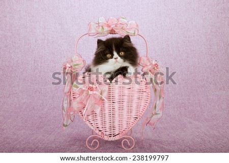 Valentine Persian kitten sitting inside pink heart shape Valentine basket on pink lilac background  - stock photo