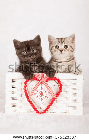 Valentine theme kittens sitting inside white basket with ornamental red valentine heart on light grey background - stock photo
