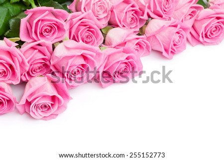 Valentines day background with pink roses. Isolated on white with copy space - stock photo