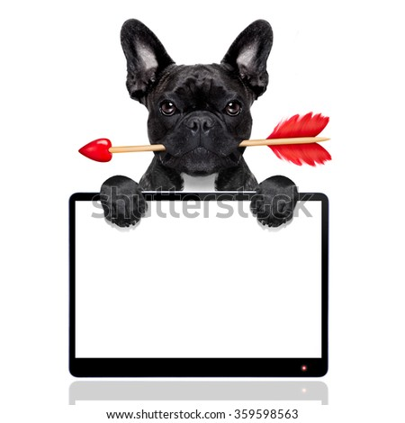 valentines french bulldog dog in love holding a cupids arrow with mouth ,behind blank empty pc computer tablet screen  , isolated on white background - stock photo