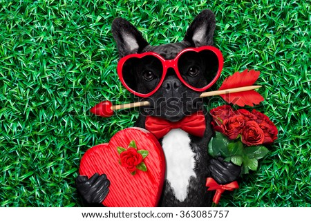 valentines french bulldog dog in love holding a cupids arrow with mouth ,wearing sunglasses,lying on meadow grass in park , with gift box and roses - stock photo