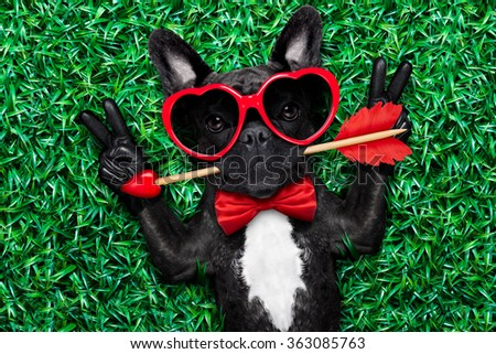 valentines french bulldog dog in love holding a cupids arrow with mouth ,wearing sunglasses,lying on meadow grass in park , with peace or cool victory fingers - stock photo