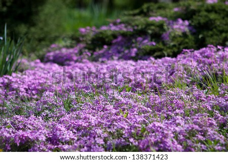 Valley with purple flowers and green grass on a background - stock photo