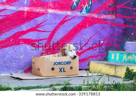 VALPARAISO - NOVEMBER 07: Street dog and street art in Alegre districts of the protected UNESCO World Heritage Site of Valparaiso on November 7, 2015 in Valparaiso, Chile - stock photo
