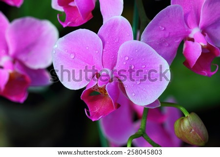 Vanda orchids are One of the orchid family (Orchidaceae), a genus is not very big (about 50 species). - stock photo