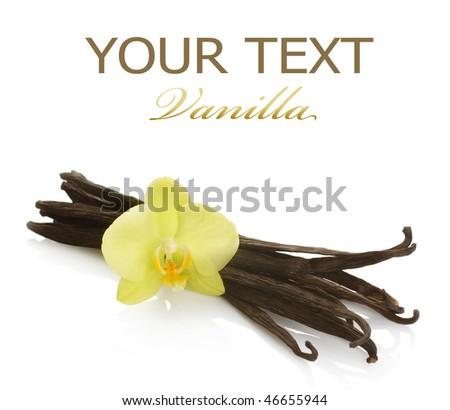 Vanilla over white - stock photo