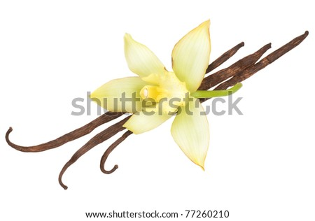 Vanilla pods and flower - stock photo
