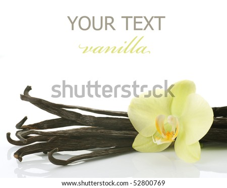 Vanilla Pods and Flower over white - stock photo