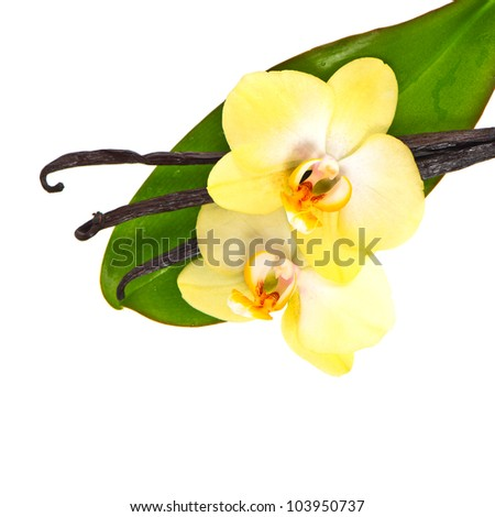 vanilla pods with orchid flower and green leaf isolated on white background - stock photo