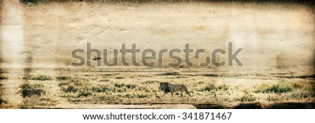 Vanishing Africa: Vanishing Africa: vintage style image of a lion and a lioness in the early morning lights in the Ngorongoro Crater, Tanzania - stock photo