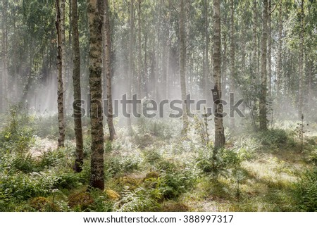 Vapor rises from forest floor when the sun appears after a hailstorm. - stock photo