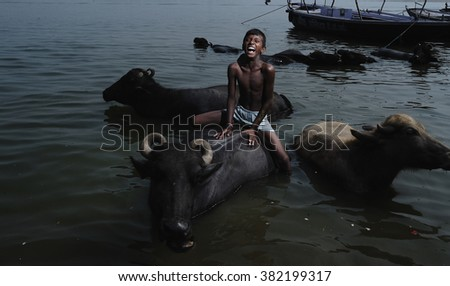 VARANASI, INDIA, NOVEMBER 4 2015: A young boy sitting on water buffalo in Ganges River. - stock photo